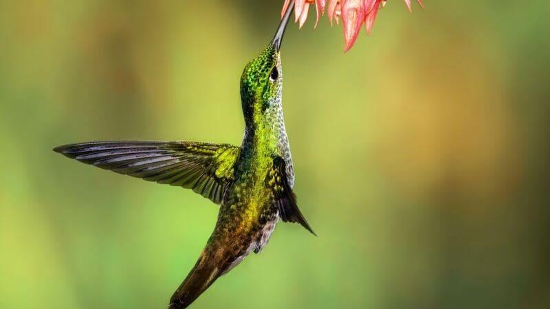 Para la observación de aves (como este colibrí) se pueden usar prismáticos y telescopios terrestres.