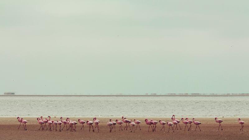 Para observar colonias de aves es importante que los prismáticos tenga un gran campo de visión.