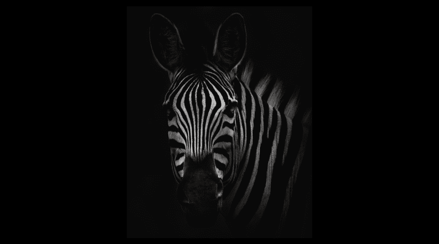 Las gafas de visión nocturna son muy comunes en safaris para ver animales por la noche.