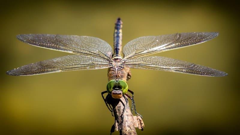 Con unos prismáticos también puedes observar mariposas y libélulas.