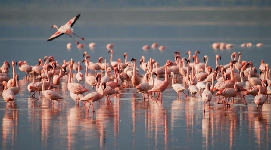 En un Parque Nacional y en un observatorio de aves se pueden ver muchas aves de distintas especies.