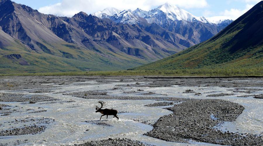 Los prismáticos Zeiss resisten temperaturas extremas y pueden usarse en lugares tan fríos como Alaska.