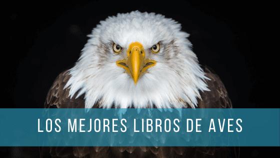 Con los mejores libros sobre aves aprenderás a distinguirlas incluso por su vuelo.