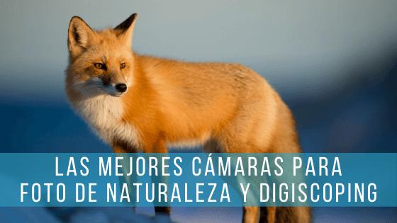 Una selección con las mejores cámaras para hacer fotografía de naturaleza: cámaras compactas, EVIL Micro 4/3 y réflex.