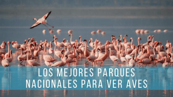 Los mejores Parques Nacionales y observatorios para ver aves en España.