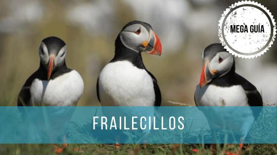 Los frailecillos son aves que habitan en las regiones más frías del hemisferio norte, tanto en el Océano Atlántico como en el Pacífico.