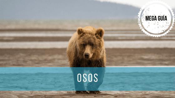 Mega Guía sobre osos: especies, peligro de extinción y hábitat.