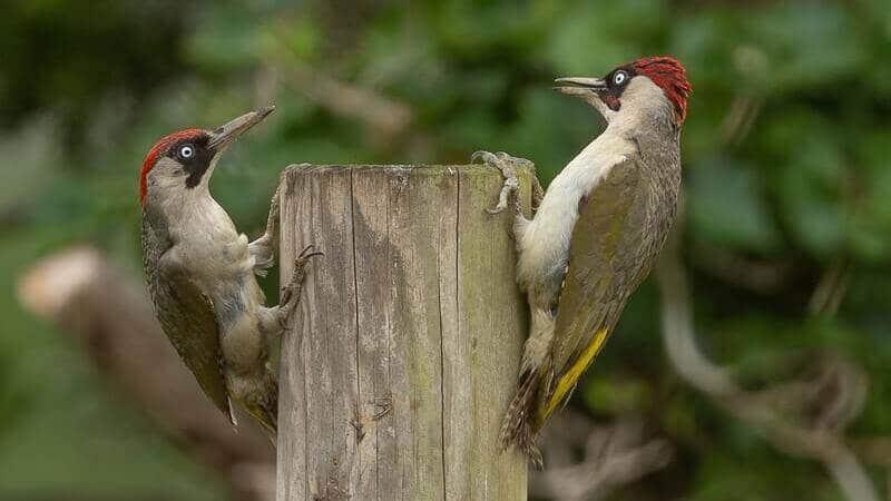 ¿Sabes qué especie de aves son?