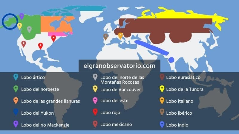 Mapa con las especies de lobo y las regiones en las que habitan.
